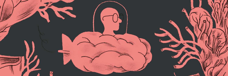 Bodem van het brein