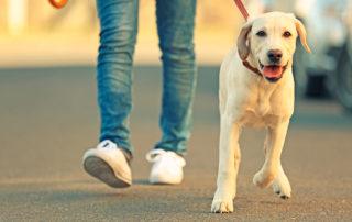 Navigatiestrategieën en de problemen die honden ondervinden
