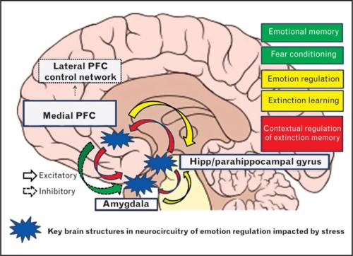 Invloed stress op brein