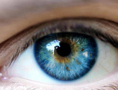 Het oog wil ook wat