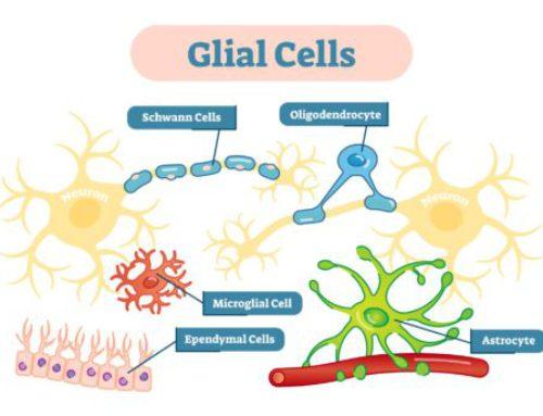 Glia, meer dan de lijm van ons brein?